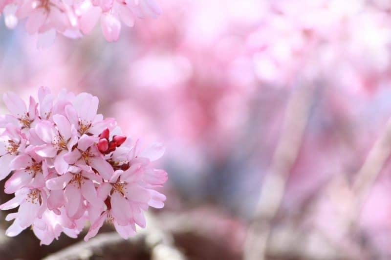 Spring Will Be Here Soon: Midweek Meander #7
