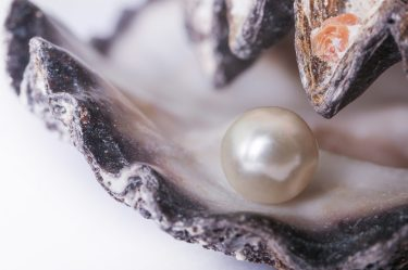 Pearls inside of an oyster